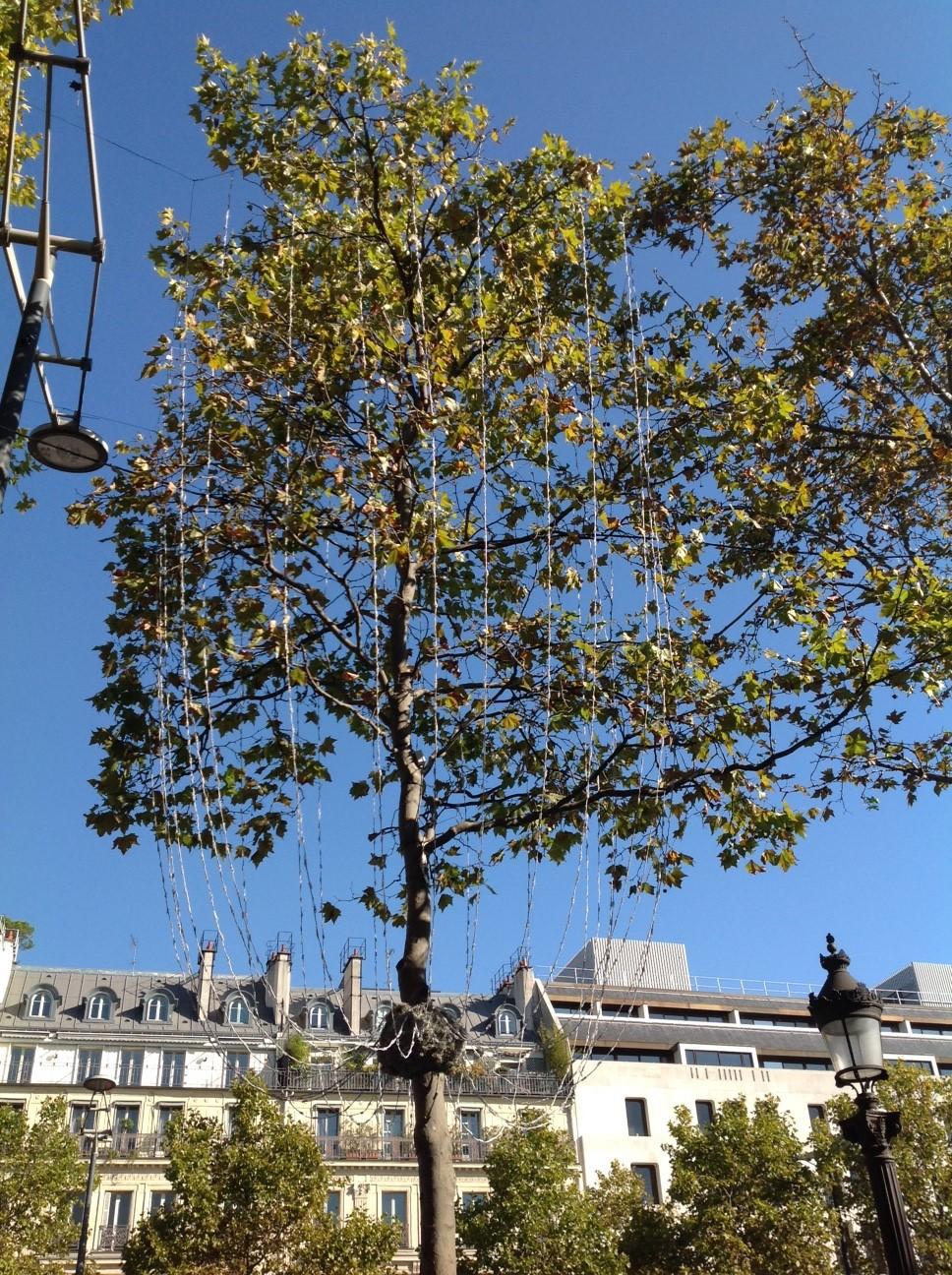 Champs Elysées, Paris, illuminations 2015, installation en cours - Photo Vincent Laganier